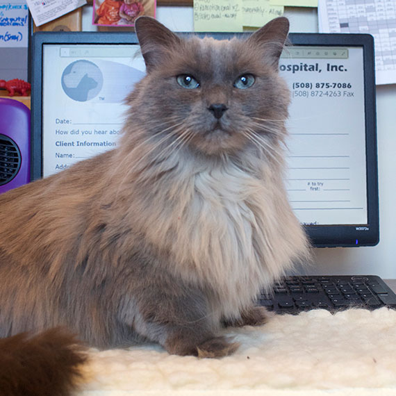 Dr. Schmeider's cat Jolene